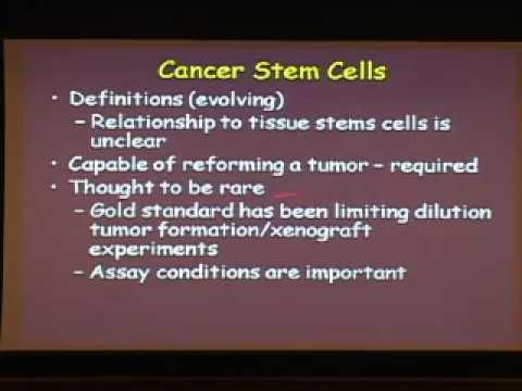 Modeling Tumor Heterogeneity in Malignant Melanoma