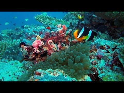Scuba Diving at Maldives 2016
