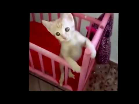 Gatito bebe video dulce gatito toma mamadera en cunita videos gatitos graciosos gatito bebe