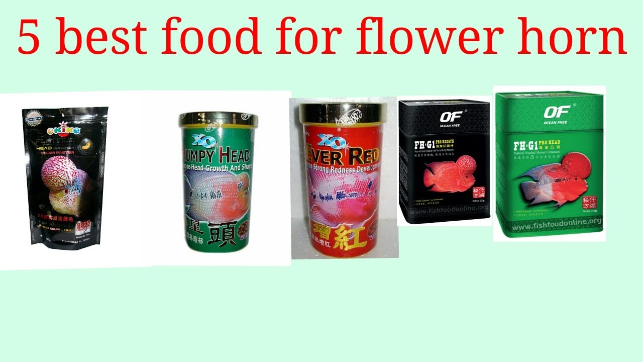 5 best food for flower horn,,,,in hindi | Doovi