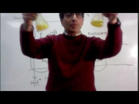 DrM AP BIO ETC DEMO  Riboflavin (Vitamin B2) Color Changes with Reduction and Oxidation