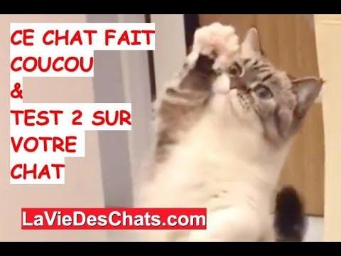 Ce Chat 🐱 Fait Coucou & TEST 2 Sur Votre Chat