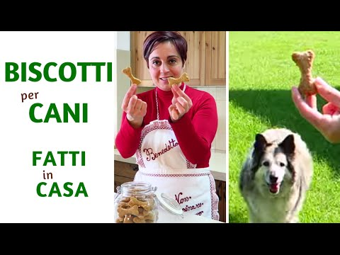 BISCOTTI PER CANI FATTI IN CASA DA BENEDETTA - Homemade Dog Treats - YouTube
