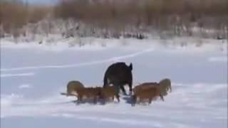 Рыбалка в татарстане видео
