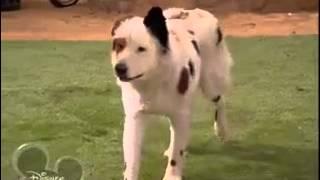 Собака точка ком   1 сезон, 22  8серия