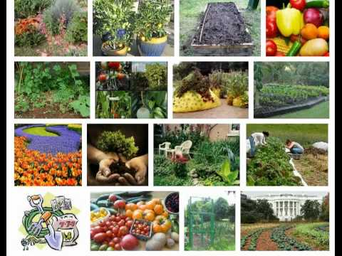 Organic Gardening - The Pros and Cons