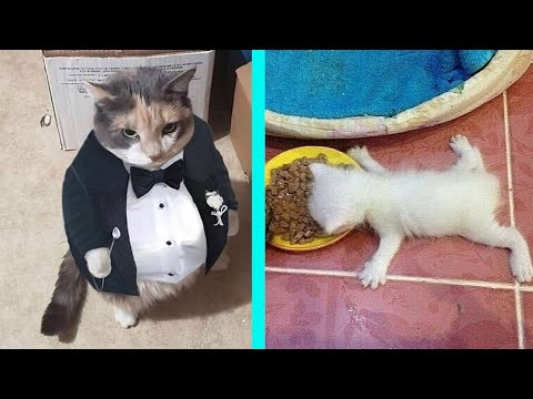 (Re-Upload) BEST CAT MEMES COMPILATION OF 2020 PART 12 (FUNNY CATS)