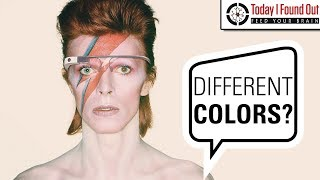 What was Up with David Bowie's Left Eye?