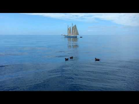 Offshore rescue of Regulus between Tonga and NZ