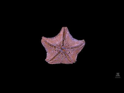 Virtual Dissection Of Derwent River Seastar
