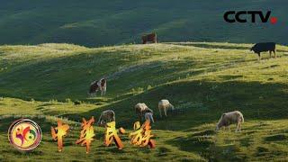 《中华民族》 20200728 交响丝路·农事| CCTV - YouTube