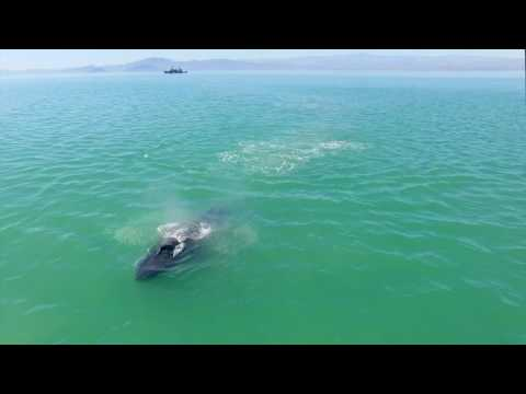 Op. Milagro III:  Dolphin and Whale Day in the Gulf of California