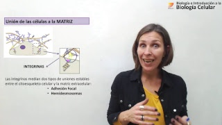 Biología Celular: Uniones Celulares (19/09/2018)