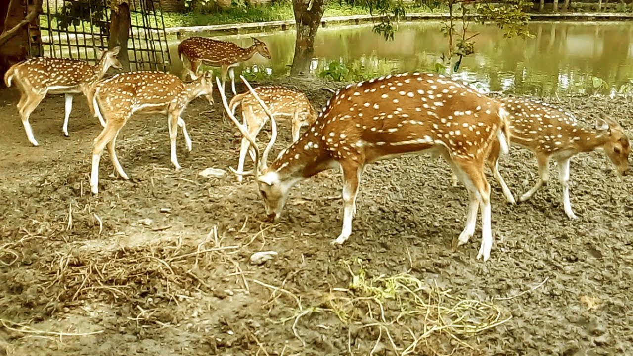 is deer farming legal in india