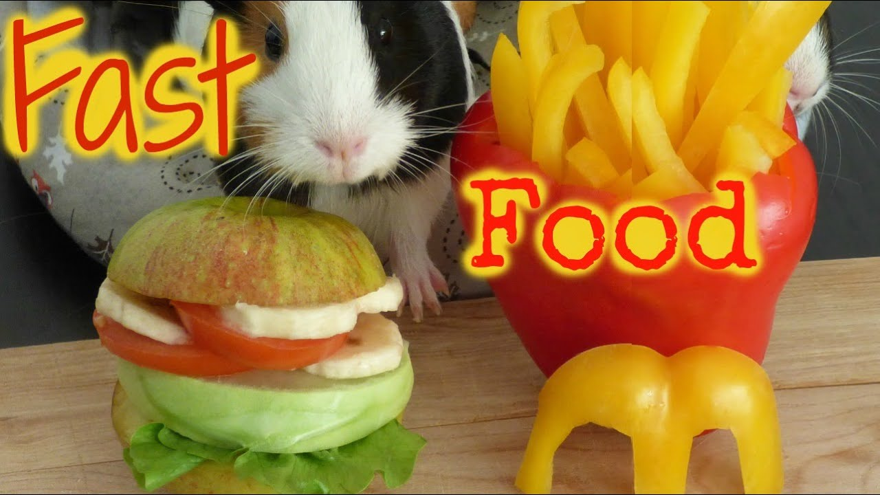 Can You Feed Guinea Pigs Hamster Food