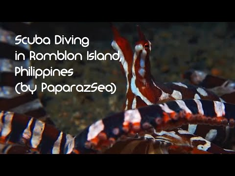 Scuba Diving / Tauchen in Romblon Island with Ducks Diving / The Three P (by PaparazSea)