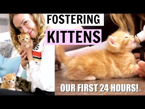 I'M FOSTERING BABY KITTENS! | Our first 24 hours! (My First Time)