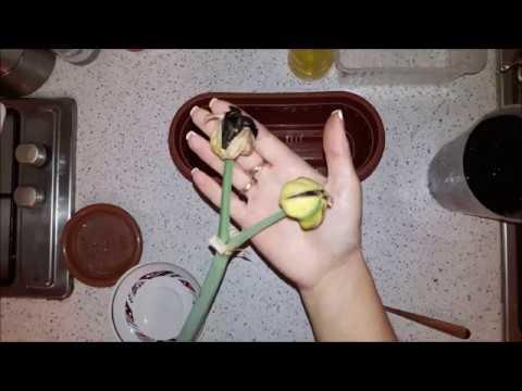 Амариллисы 09. Семенная коробочка, семена, посадка.