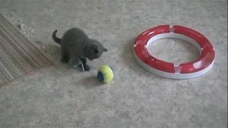 Игривые,ласковые Британские котята.