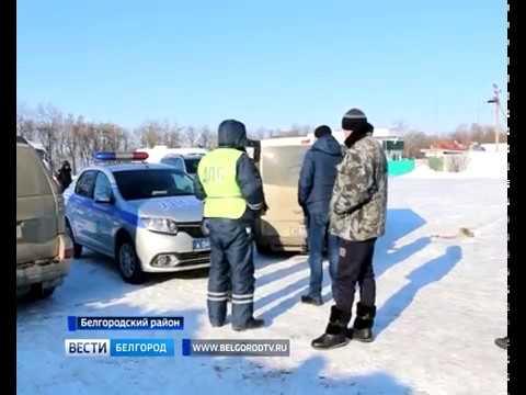 ГТРК Белгород - Россельхознадзор задержал 20 тонн рыбы и фуру с салом