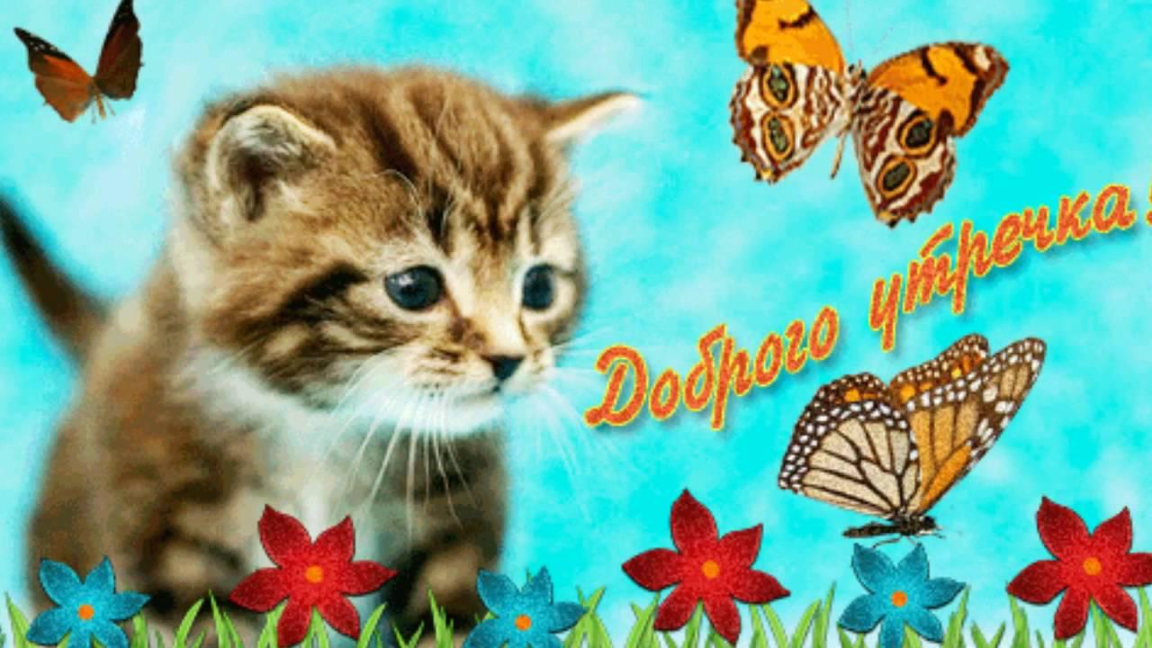 4 сен 2017. Архив рубрики: картинки с котами. 13 316 просмотров; милые котики 12 942 просмотров; с добрым утром 12 687 просмотров.