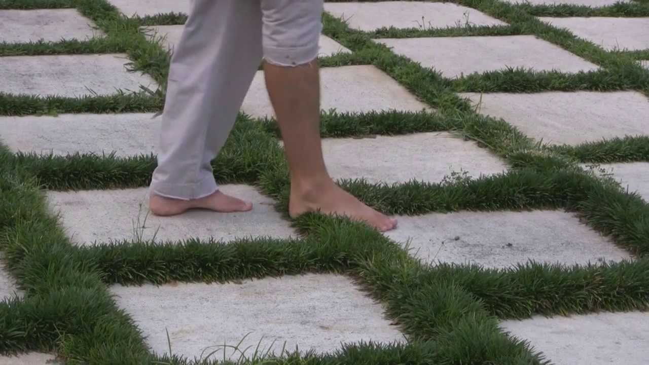 How to plant ground cover between pavers -  Dwarf Mondo Grass Ground Cover Plant Correctly Ga Resort Youtube