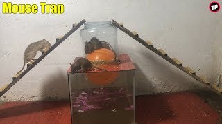 Balloon Water Bottle Mouse Trap/How to make a Mouse Trap homemade with Balloon/Tip Mouse Trap