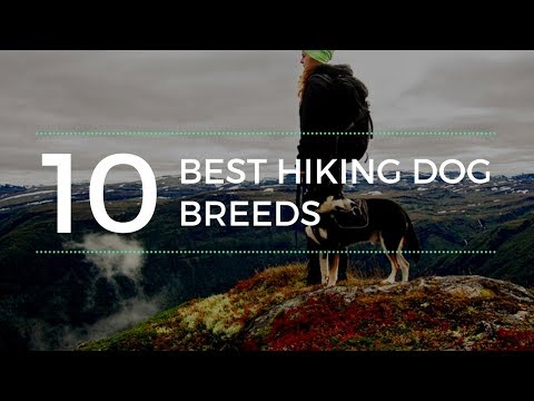 Good Hiking Dogs - Top 10 Best Hiking Dog Breeds In The World