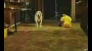 Click - Dog Scene