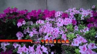 台灣的老歌【南國的賣花姑娘】文夏 演唱