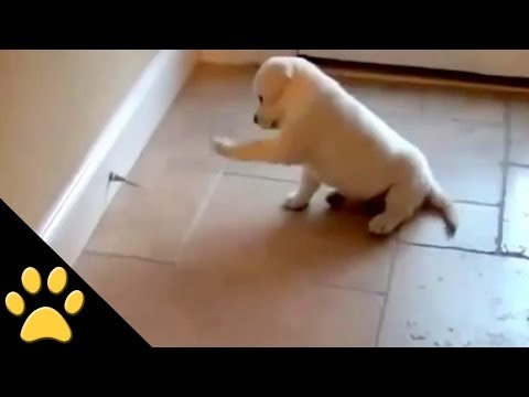 Cute Puppy Vs. Doorstop