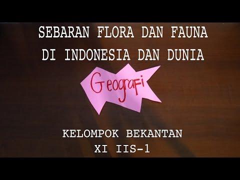 Sebaran Flora dan Fauna di Indonesia dan Dunia - Stop Motion SMAN 77 Jakarta Kelas XI IIS-1