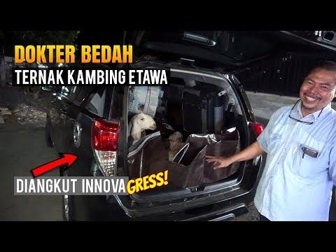 Dokter Bedah Beternak Kambing Etawa, Alasan Memilih Etawa Senduro 5 Oktober 2018