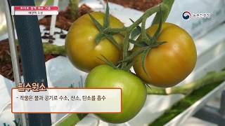 토마토 양액 제조 기술 - 2. 배양액 조성