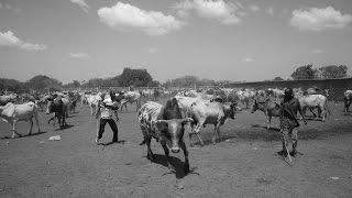 Burkina Faso : Marché aux bestiaux de Fada n'gourma