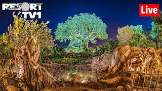 🔴Live: Animal Kingdom Open Late! Walt Disney World Live Stream - 6-14-19