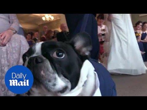 Dog Saves Wedding Day When Best Man Forgot Their Wedding Rings