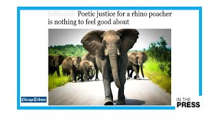 """""""No poetic justice"""" for rhino poacher trampled by elephant, then eaten by lions"""