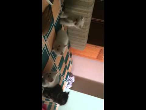 Mèo ald 34 con mẹ bông