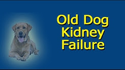 Old Dog Kidney Failure