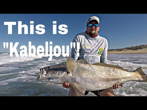 AUSTRALIAN MULLOWAY Is What We CALL KOB IN SOUTH AFRICA And They ARE BIG!!! Fishing For The FUTURE!