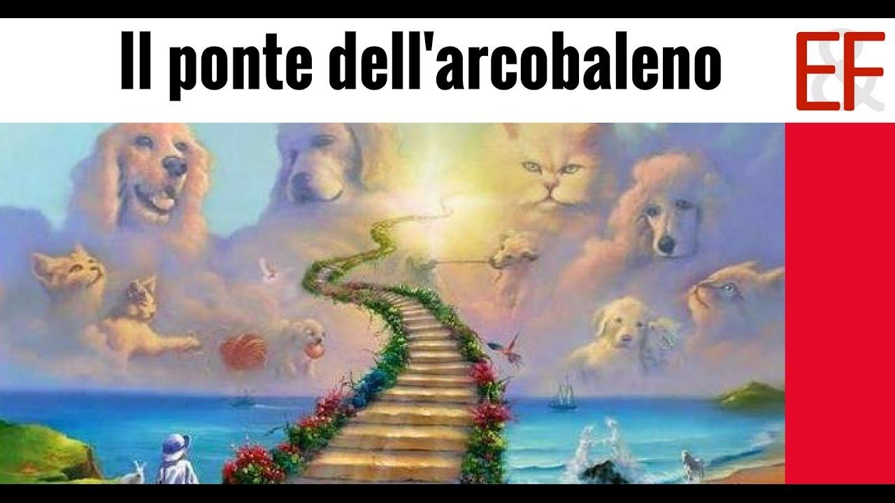 il ponte dell'arcobaleno - il paradiso di cani, gatti e tutti gli