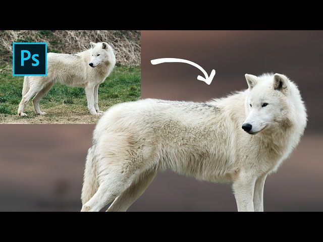 Photoshop tutorial: How to cut images with fur or hair