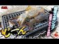 【エギンガー閲覧注意】生きたアオリイカをコンロで焼いて食ってみた!初冬エギング