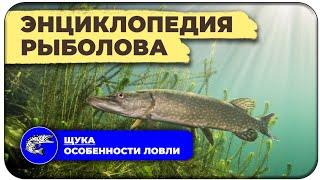 Щука Особенности ловли Энциклопедия рыболова