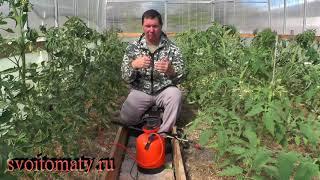 Как правильно подкармливать по листве