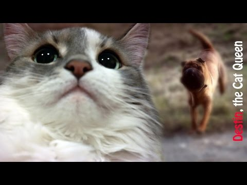 Shar Pei Dog is Chasing Cat in Super Slow Motion - The Cat Queen