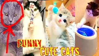 CUTE CATS AND DOGS DOING FUNNY THINGS 2018 #02 | CATS AND DOGS FUNNY COMPILATION | CuteBD