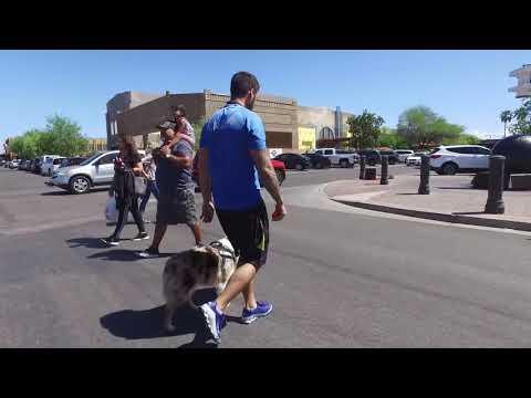Zaylee 3 yo Australian Shepherd Best Arizona Dog Trainers