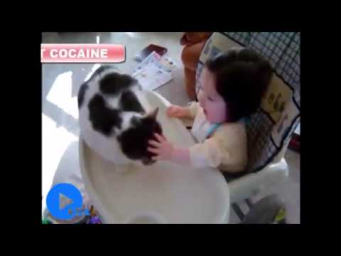 Funny Cats vs. Humans - Endless Pranks